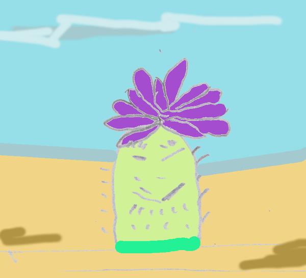 cactusstrip8